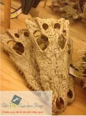 Sọ cá sấu