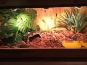 Bể gỗ chuyên dụng cho rùa
