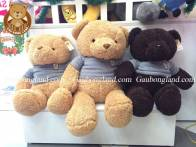 Gấu teddy Head To