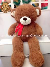 Teddy Nơ Đỏ