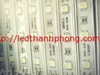 Led hắt cụm 3 bóng SMD 5050