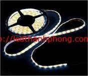 Led-day-dan-5050-vang