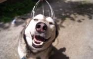 Biểu cảm ngộ nghĩnh của chú chó khi được massager đầu