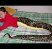 Cô gái người rắn - Chuyện lạ - Có thật - Khó tin