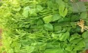 Đặc sản rau rừng: Rau bò khai - Rau sắng - Rau dớn ... Ẩm thực đồng bào Thái đen