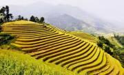 Kinh nghiệm du lịch Hoàng Su Phì mùa lúa chín - Phượt Hà Giang mùa lúa chín.