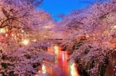 Lễ hội hoa anh đào nổi tiếng ở Hàn Quốc