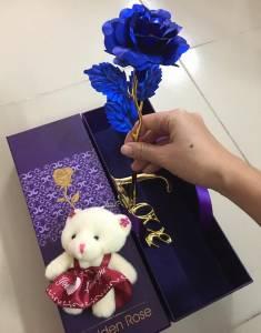 Hoa hồng xanh và gấu