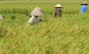 Triển Khai Lắp Đặt Hệ Thống Camera cho Công Ty Gạo Bảo Minh