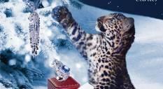 Cartier thương hiệu thời trang cao cấp chúc mừng giáng sinh