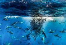 Thiên nhiên hoang dã - Big Pictures 2017