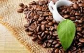 Cà phê giúp ngăn ngừa bệnh ung thư