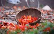 Bài thuốc chữa bệnh xương khớp độc đáo từ cây hoa gạo