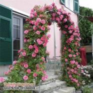 14 cổng nhà có hoa hồng leo