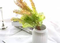 Cách chăm sóc cây Dương Xỉ Đuôi Phượng trồng trong nước