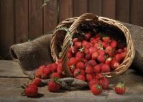 Cách gieo trồng dâu tây từ hạt giống