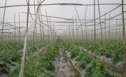 Tuyển kỹ sư trồng trọt phụ trách dự án
