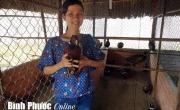 Đệm lót chuồng sinh học: Lợi ích kép cho người chăn nuôi