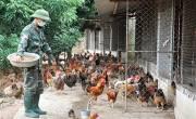 Phòng chống dịch bệnh cho đàn gia súc, gia cầm không dùng vacxin