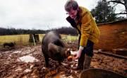 Vai trò của phụ gia thảo dược với vật nuôi