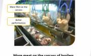 Phần 3. Quy trình kỹ thuật chăm sóc, nuôi dưỡng gà lông màu