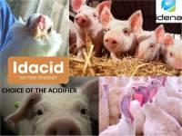 IDACID G2P - Viên vi bọc