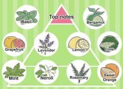 Hướng dẫn cách pha chế nước hoa từ tinh dầu nguyên chất