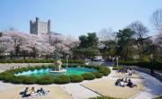 Tại sao nên đi Du học Hàn Quốc tại Seoul ngay mùa xuân này