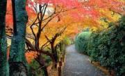 Du học Nhật Bản kỳ tháng 10 vừa kịp ngắm lá mùa thu tại Osaka