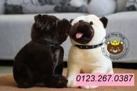 Chó BULL DOG (40cm)