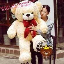 Teddy nơ Yiyaya (1m2, 1m4)