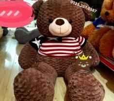 Teddy Texas (90cm, 1m2, 1m4, 1m8)