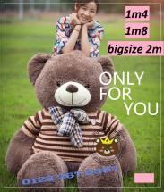 Teddy Cool (1m8, 2m)