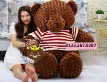 Gau teddy co my socola (1m8)