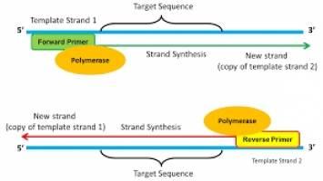 Tham khảo thiết kế phòng thí nghiệm PCR