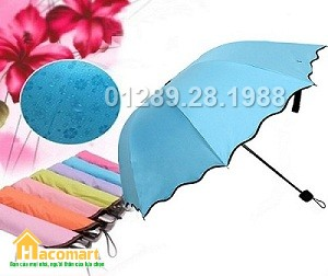 Combo 2 ô dù thời trang gặp nước nở hoa