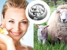 Tại sao nên dùng nhau thai cừu Úc để cải thiện sức khỏe?