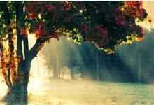 10 bức tranh mùa thu tuyệt đẹp