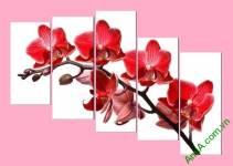 Tranh treo tường nhành lan đỏ AmiA369