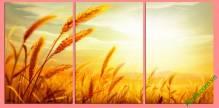 Tranh ghép bộ cánh đồng lúa mì tuyệt đẹp Amia 407