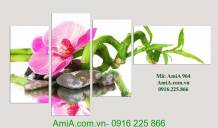 Tranh treo spa hoa phong lan hồ điệp AmiA 964