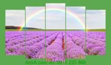 Tranh cầu vồng trên đồng hoa oải hương khổ lớn 5 tấm AmiA 3003