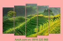 Tranh phong cảnh đẹp quê hương: Ruộng bậc thang AmiA 1117