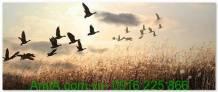 Tranh phong cảnh thiên nhiên đàn chim trở về AmiA 1301
