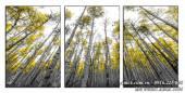 Tranh rừng cây treo tường thuộc hành Mộc AmiA 1484