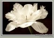 Buc-tranh-treo-tuong-hoa-trang-tinh-khoi-AmiA-1502