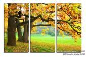 Tranh phong cảnh cây phong lá đỏ mùa Thu Amia 1504