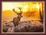 Tranh chú nai trong rừng dưới ánh bình minh AmiA 2081