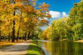 Tranh phong cảnh hàng cây lá vàng bên bờ sông AmiA 1005