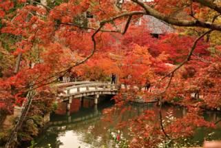 MÙA THU LÁ ĐỎ - OSAKA - NARA - KYOTO - NAGANO - HAKONE - YOKOHAMA - TOKYO